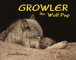 Growler the Wolf Pup